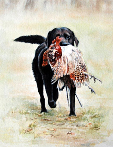 Lab with Pheasant